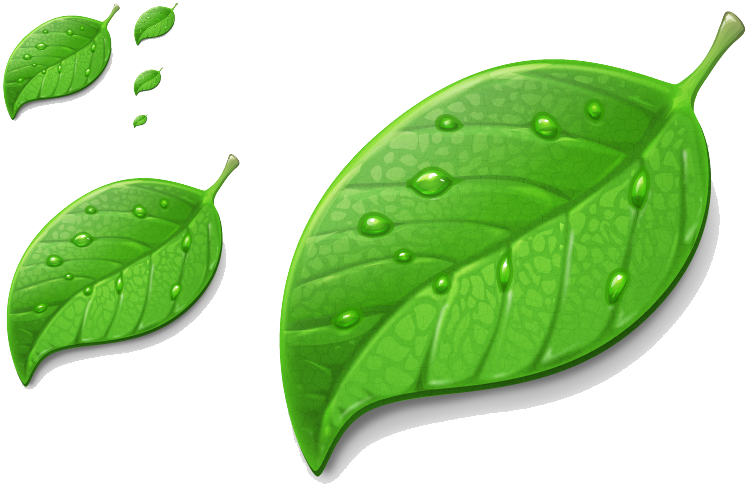 Leaf,Green,Plant,Flower,Dew,Herb,Flowering plant #4538214.