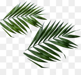 Daun PNG and Daun Transparent Clipart Free Download..