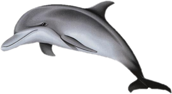 Dauphins png 2 » PNG Image.