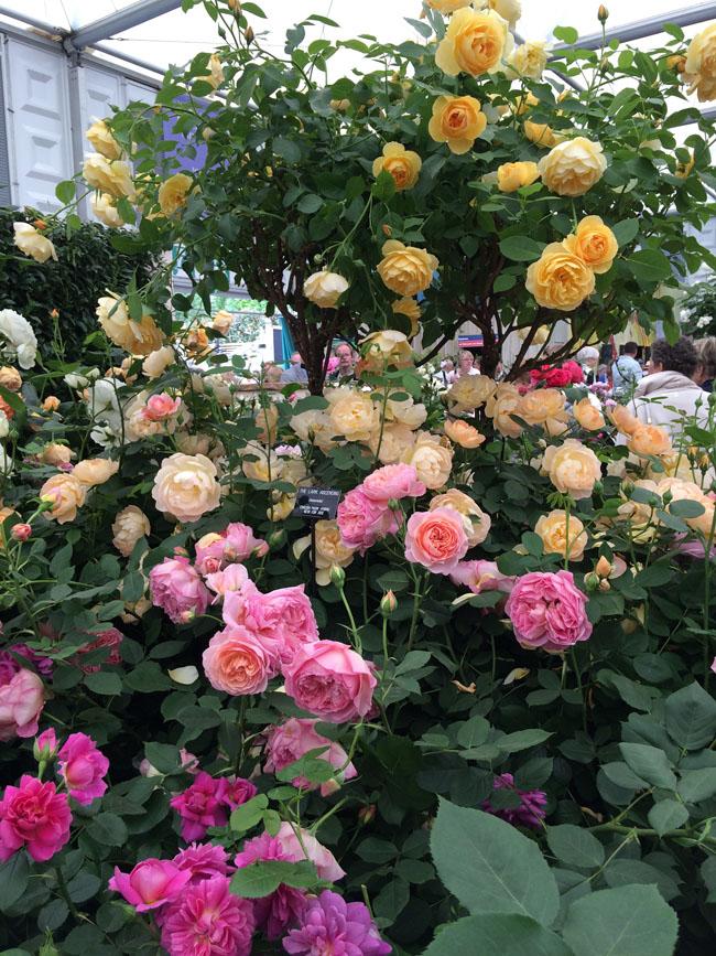Chelsea Flower Show.