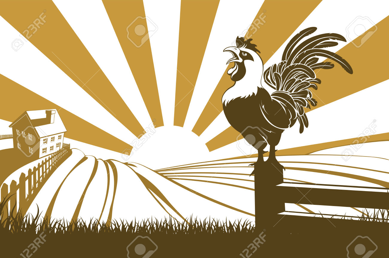 1,149 Rooster At Dawn Cliparts, Stock Vector And Royalty Free.