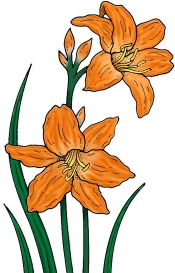 Day Lily Clipart.