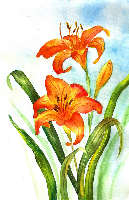 Gallery For > Daylily Flower Clipart.
