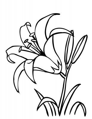 Daylily Flower coloring page.