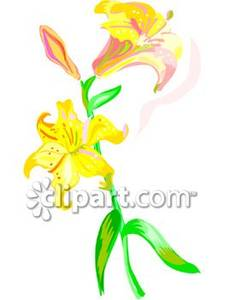 Yellow_Day_Lilies_Royalty_Free_Clipart_Picture_081029.