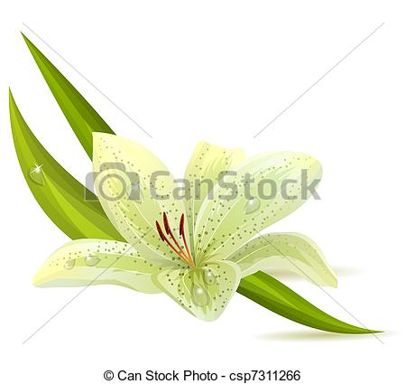 Day lily Illustrations and Clipart. 1,359 Day lily royalty free.