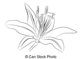 Daylily Vector Clipart Royalty Free. 19 Daylily clip art vector.