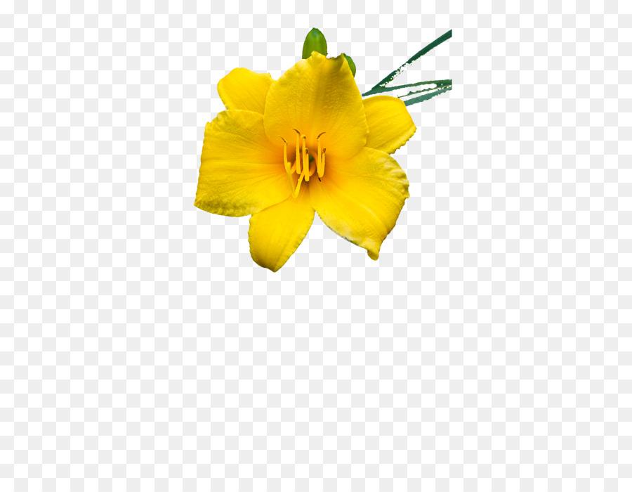 Petal Flower png download.