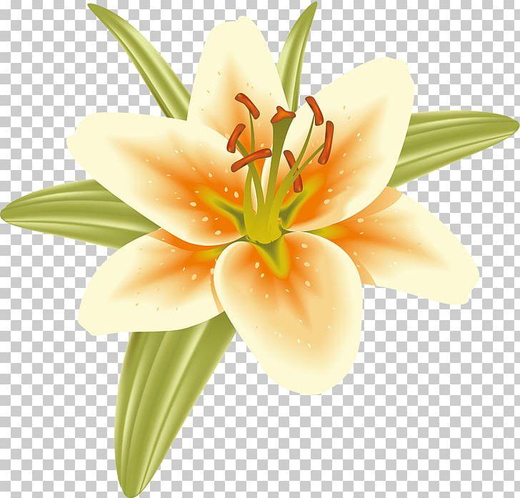 Cut Flowers Pedagogy Petal Orange S.A. Daylily PNG, Clipart, Cut.
