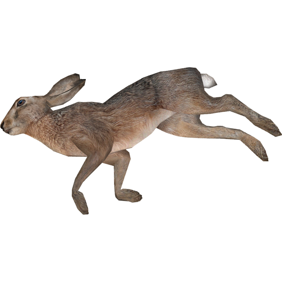 Dead Animal PNG Transparent Dead Animal.PNG Images..