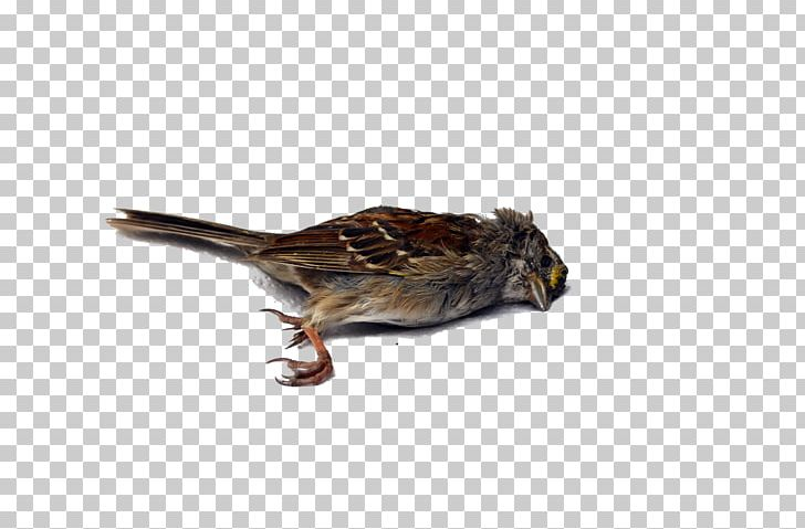 Death clipart bird for free download and use images in presentations.