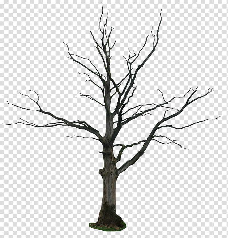Dead tree, withered tree transparent background PNG clipart.