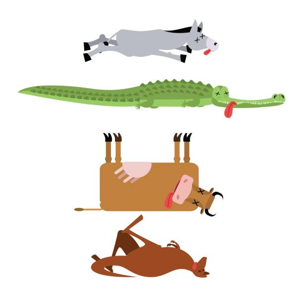 Best Dead Cow Illustrations, Royalty.