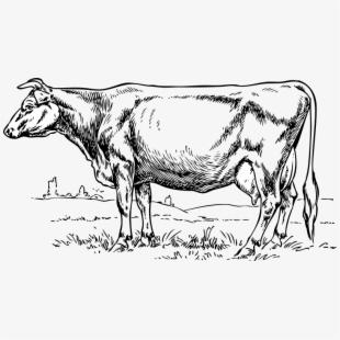 Cartoon Dead Cow Clipart , Png Download.