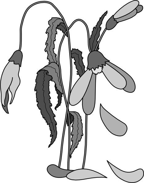 Free Dead Flowers Png, Download Free Clip Art, Free Clip Art.