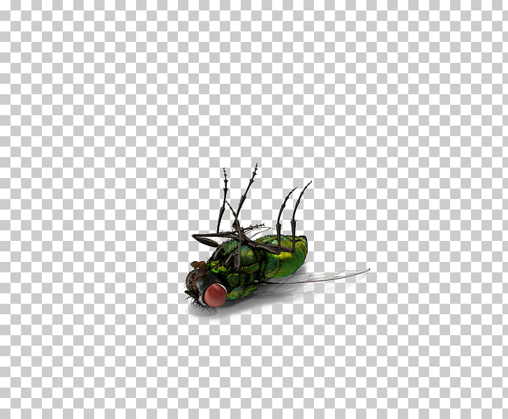 Insect Fly, Green dead flies, green fly PNG clipart.
