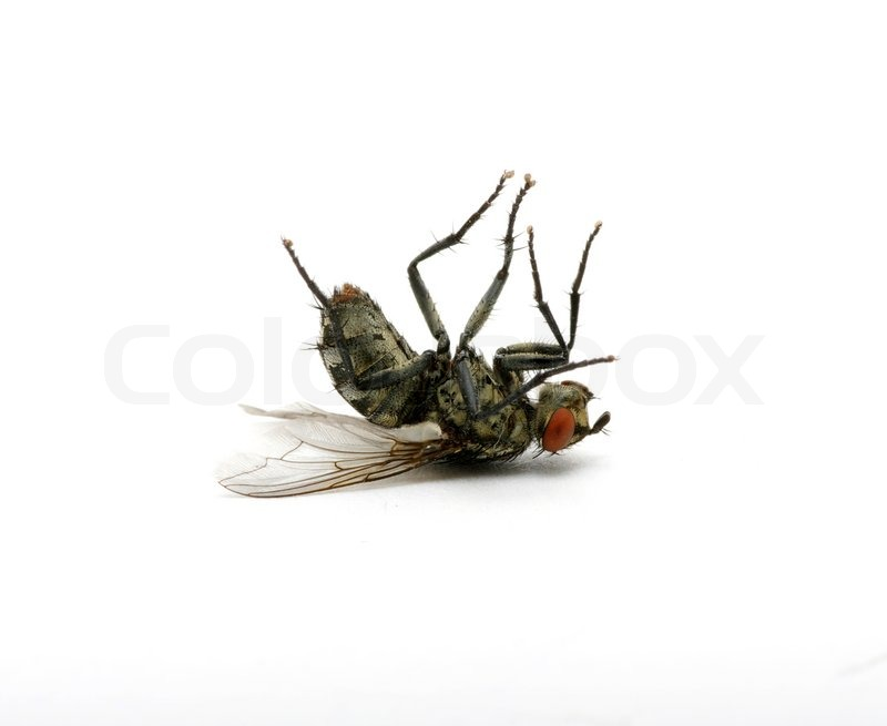 Free Dead Insects Cliparts, Download Free Clip Art, Free Clip Art on.