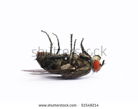 Dead Insect Stock Photos, Royalty.