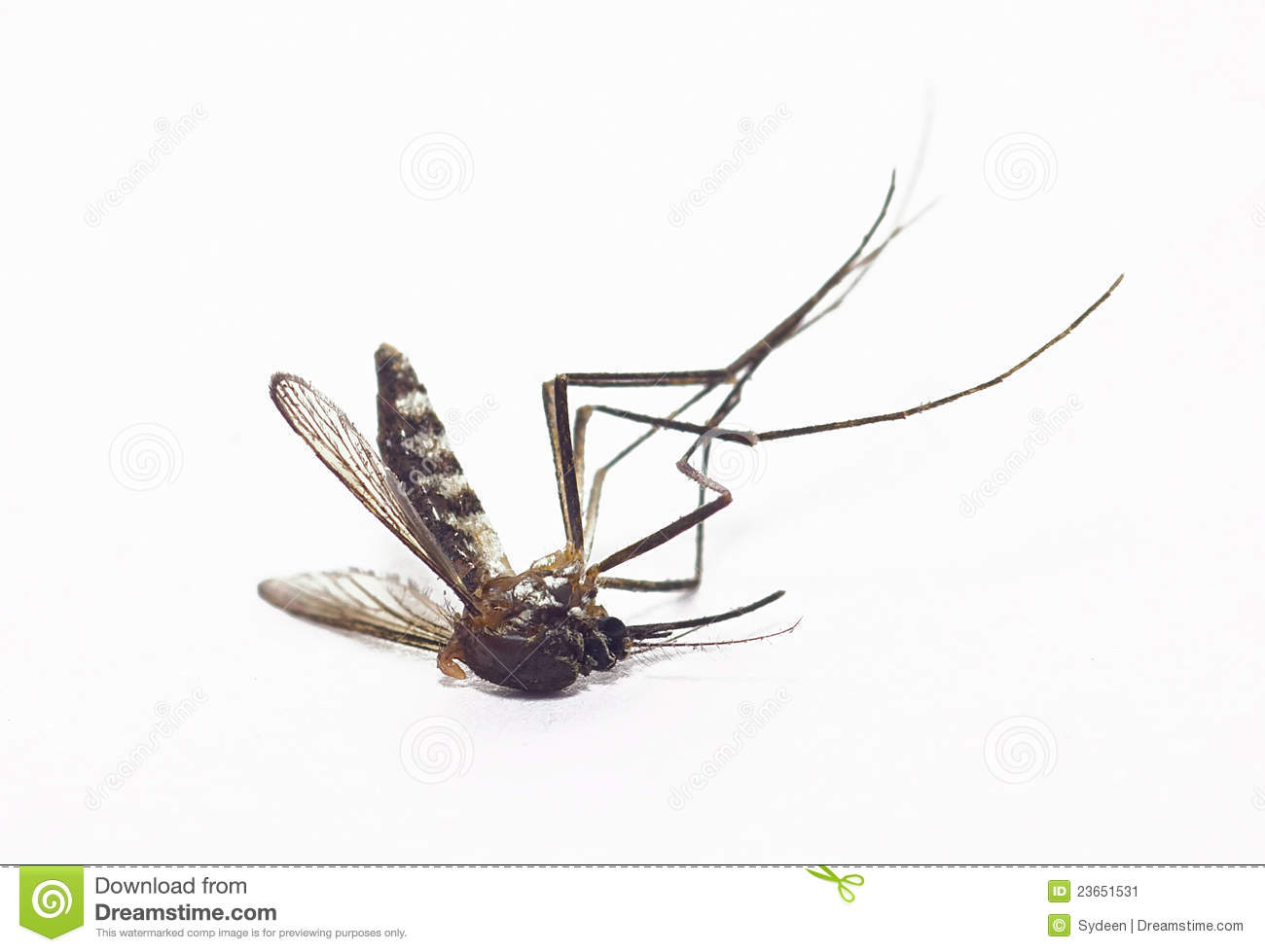 Dead Mosquito Royalty Free Stock Images.