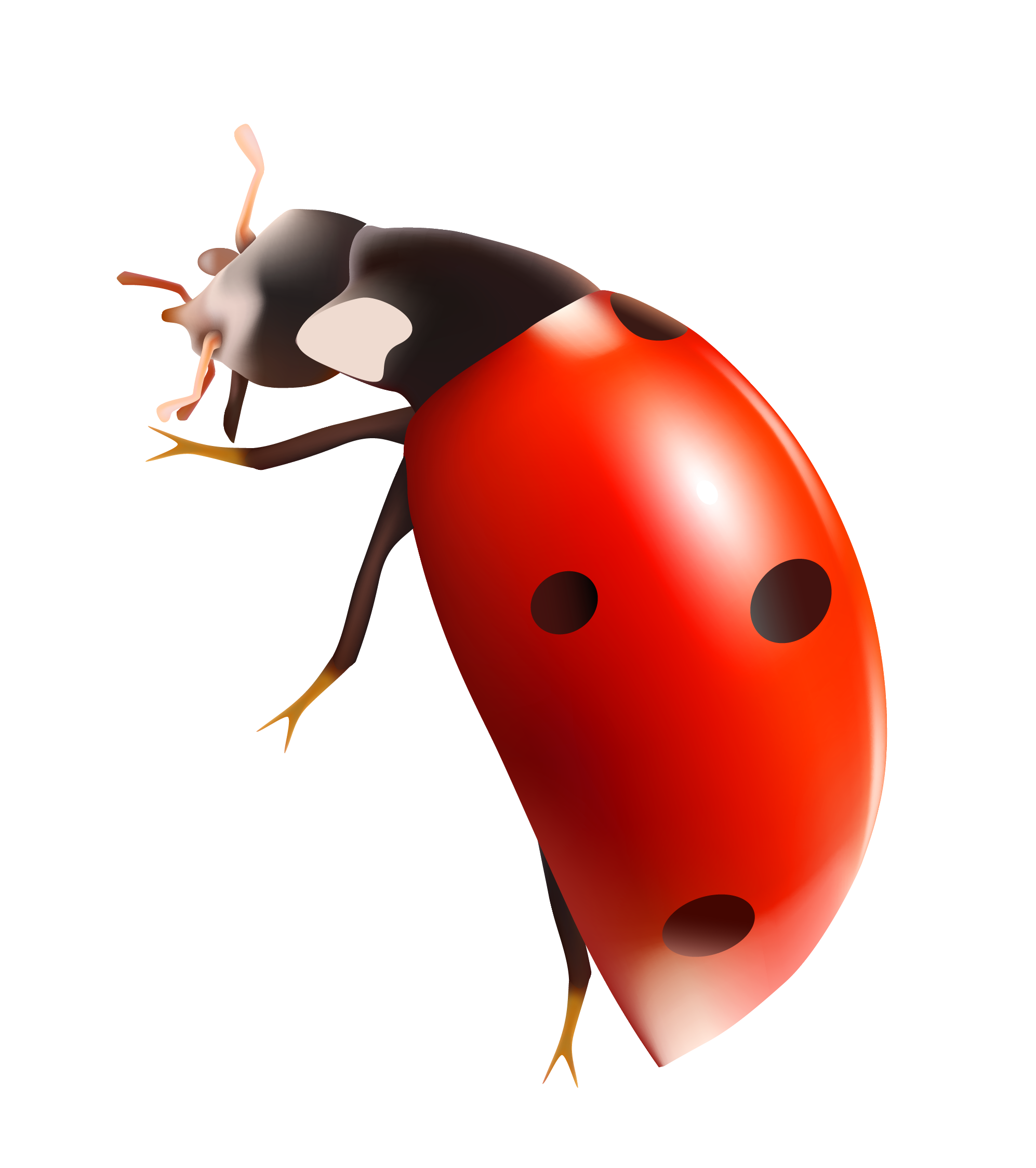 Free Ladybug Transparent Background, Download Free Clip Art.