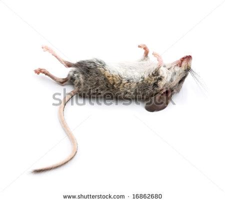 Dead Mouse Clipart.