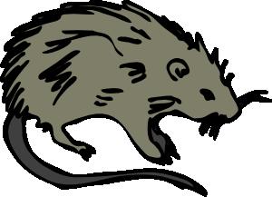 Dead Rat Clipart.