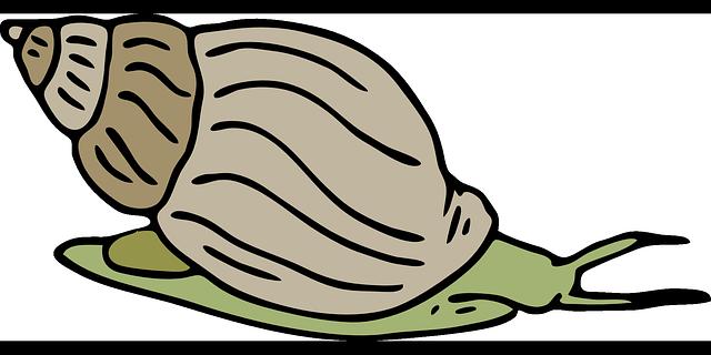 Cartoon animal clipart snail.