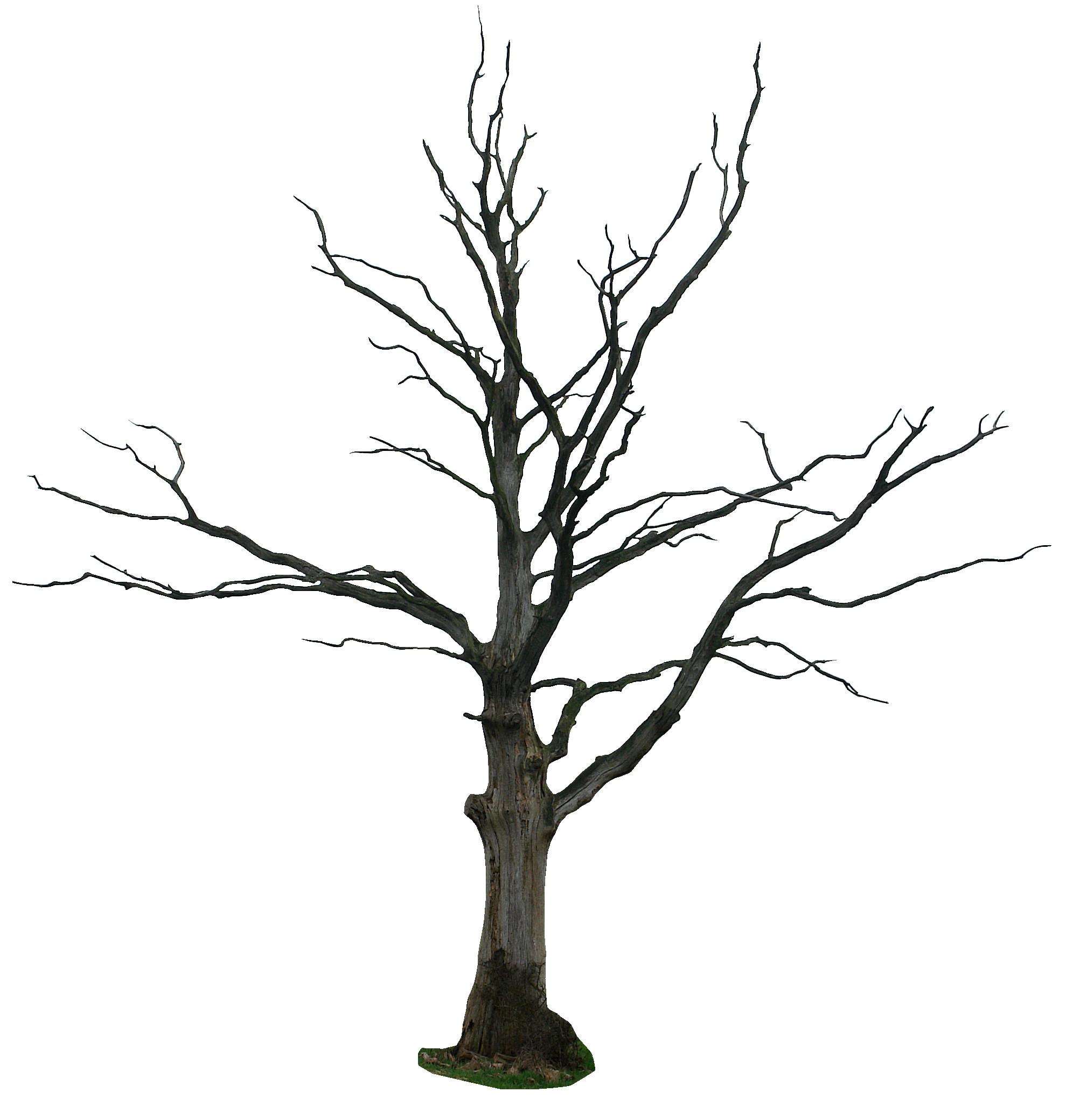 Dead tree clipart.