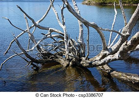 Picture of dead gnarly tree in water.