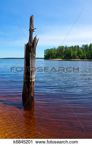 Stock Photography of Dead Tree Stands in Beautiful, Clear Lake.