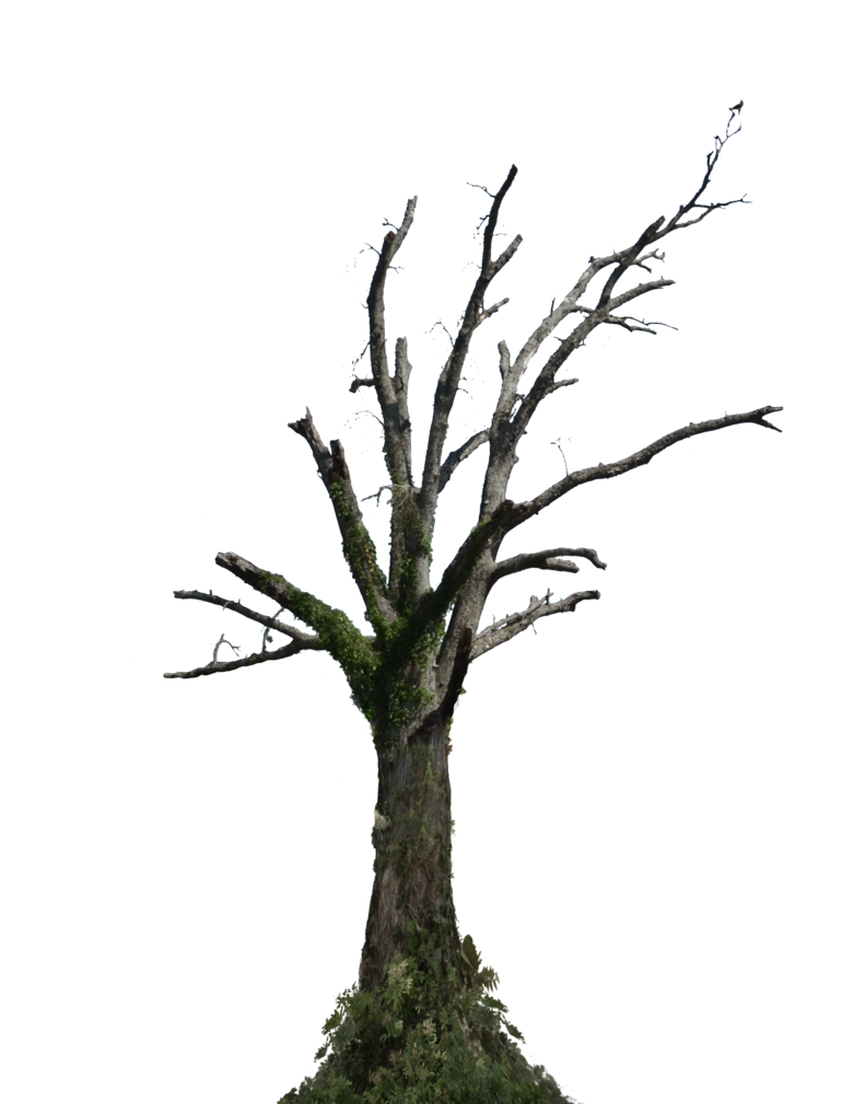 Download Free png Dead Tree PNG Stock Photo 009.