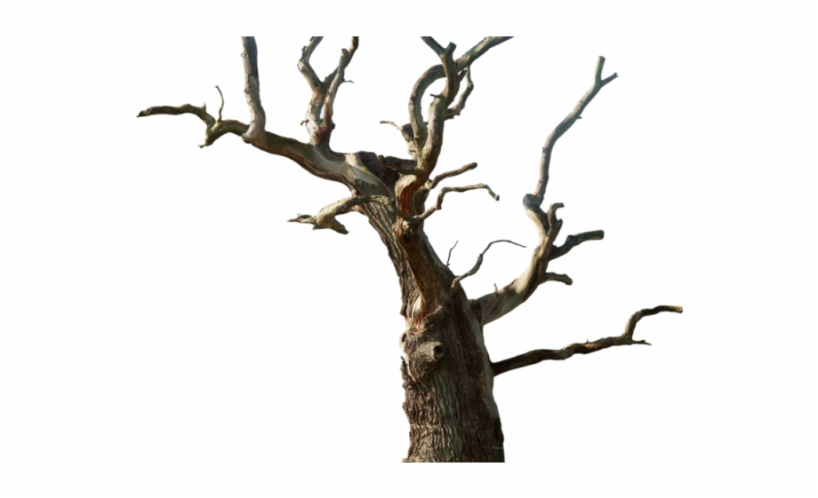 Drawn Dead Tree Desert Tree.