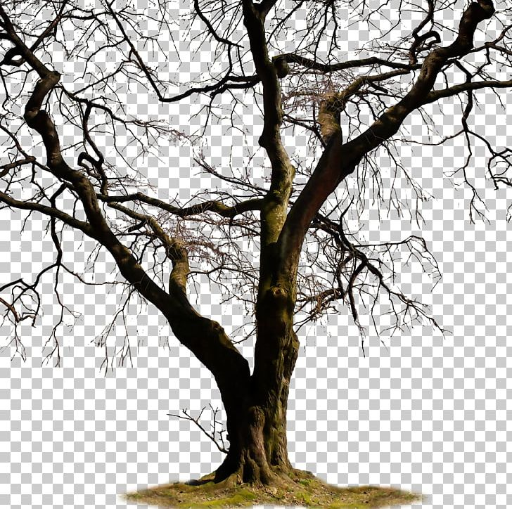 Twig Trunk Tree PNG, Clipart, Autumn Tree, Branch, Christmas Tree.