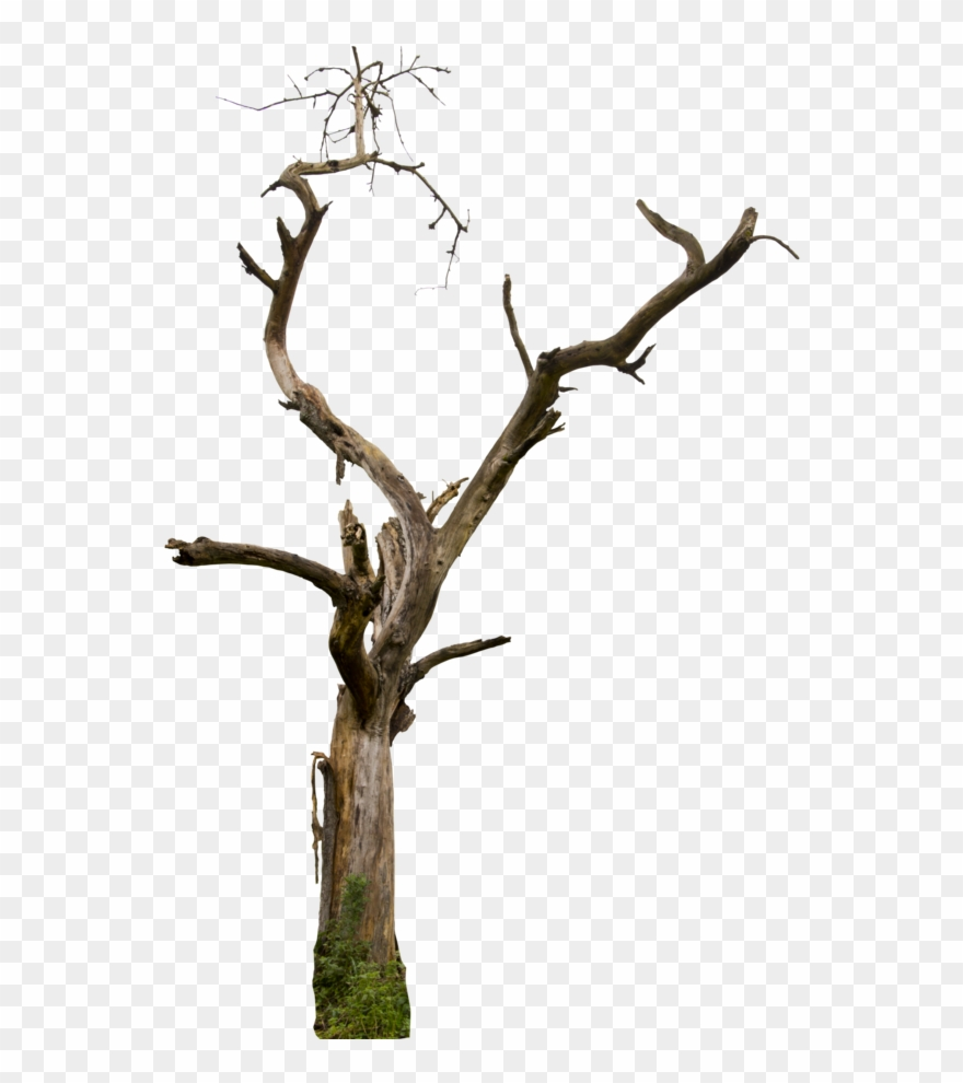 Dead Tree Clipart Desert Free Collection.