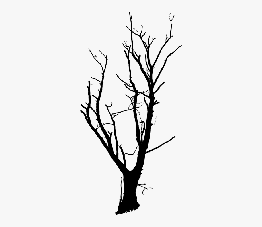Trunk Tree Branch Snag Drawing Cc0.