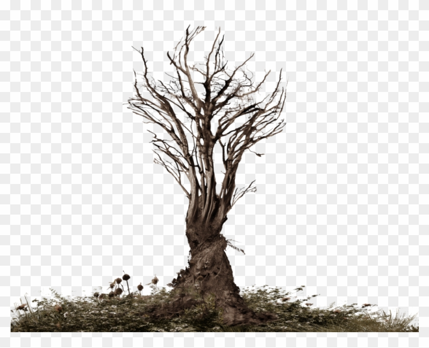 Creepy Tree Png.