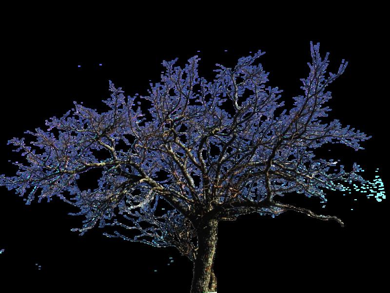 Dead Tree (PNG).