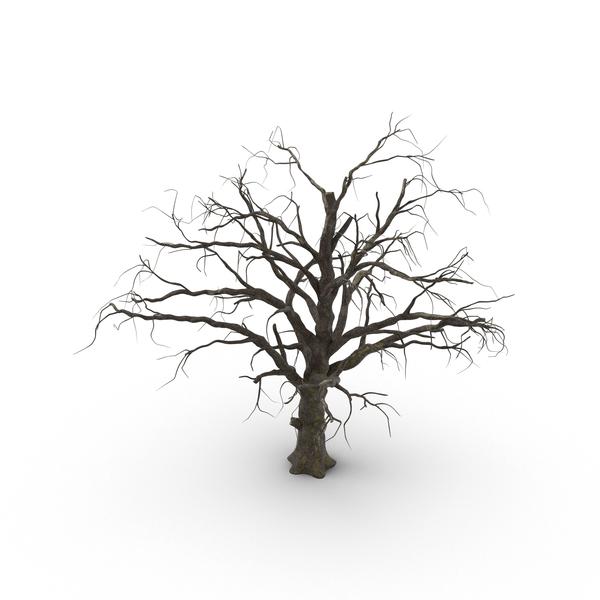 Old Dead Tree PNG Images & PSDs for Download.