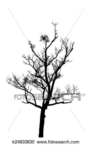Dead tree silhouette. dry oak crown without leafs isolated on white Clipart.