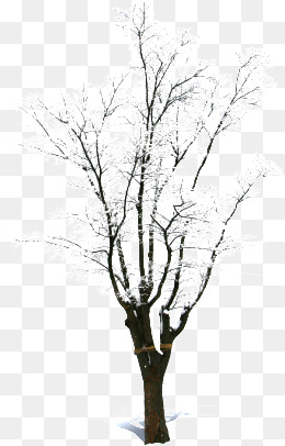 PNG Dead Tree Transparent Dead Tree.PNG Images..