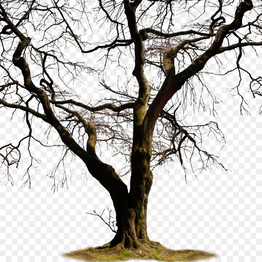 Twig Trunk Tree Clip art.