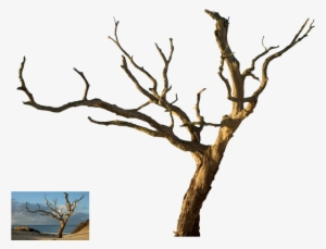 Dead Tree PNG & Download Transparent Dead Tree PNG Images for Free.