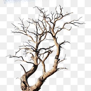 Tree Branch PNG Images.