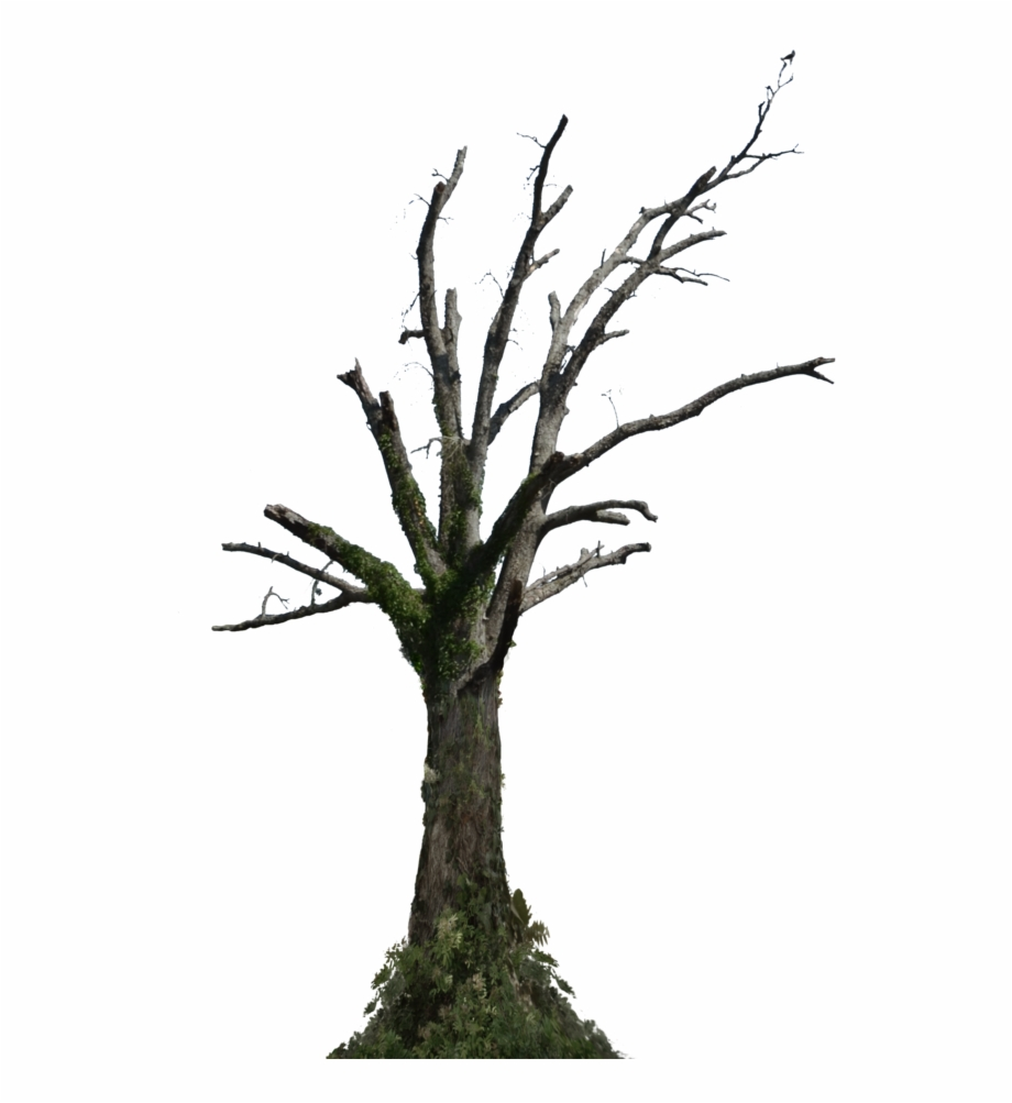 Dead Trees Png.