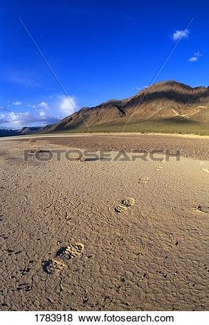 Pictures of Footprints, Death Valley National Park. 1783918.