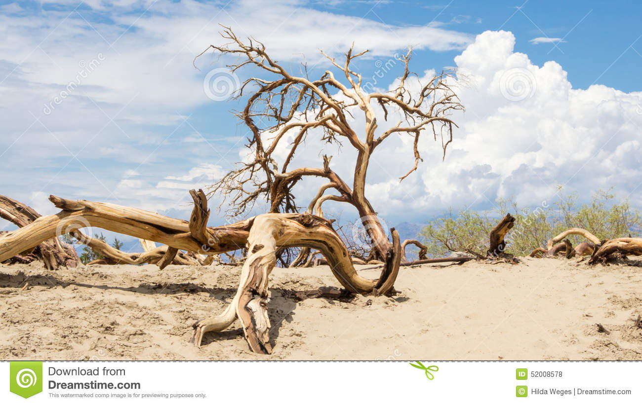 Dead Trees In Death Valley National Park Stock Photo.