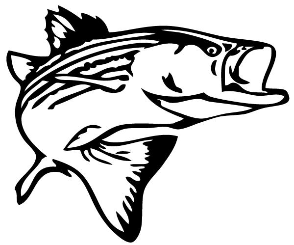 Fishing Graphics.
