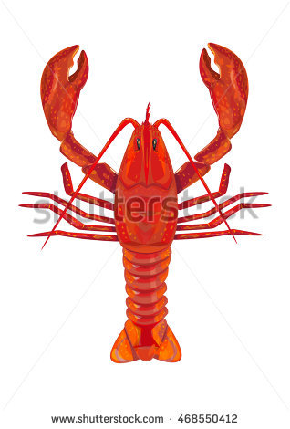 Red Lobster Top View Illustration Isolated On White Background.