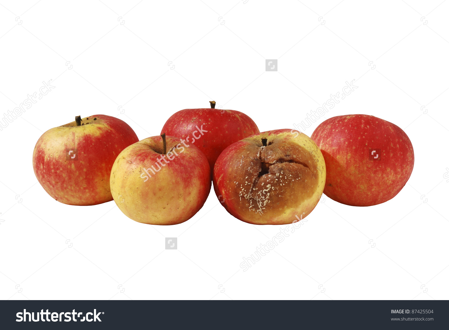 One Rotten, Bad, Decaying Apple In Bunch Of Four Good Apples Stock.