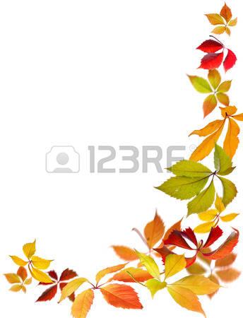 17,711 Vine Plant Stock Vector Illustration And Royalty Free Vine.